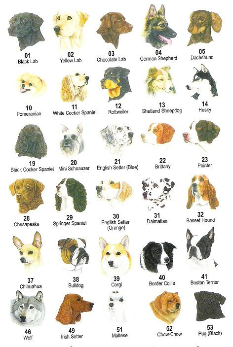 Types Of Breeds Of Dogs